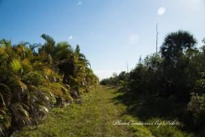 Estero Bay Aquatic Preserve