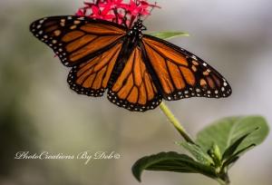2014 02 08_Butterflies_1256_edited-1