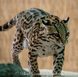 Naples Zoo Day (11)