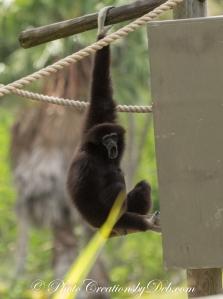 Naples Zoo Day (3)