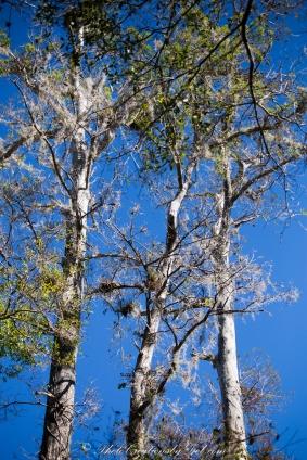 Big Cypress - Fakahatchee-5