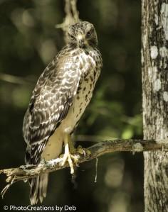 Bird Rookery - CREW-19 (Large)
