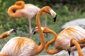 zoo-miami-1-large
