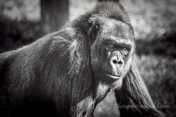 zoo-miami-29-large